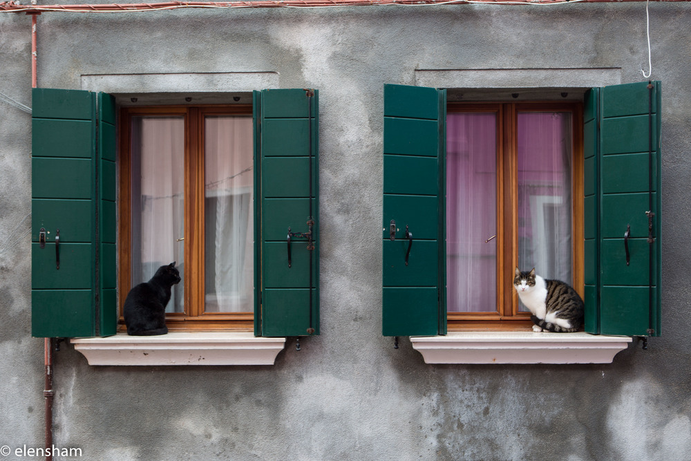 Even cats in Burano are cute!