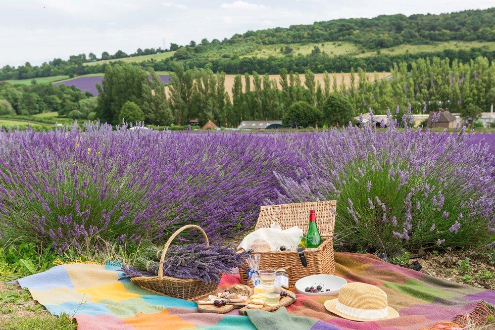 lavender picnic UK
