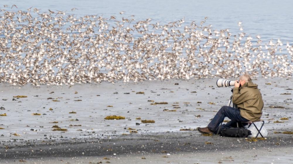 PhotographingShorebirdsDavidLittle-3646.jpg