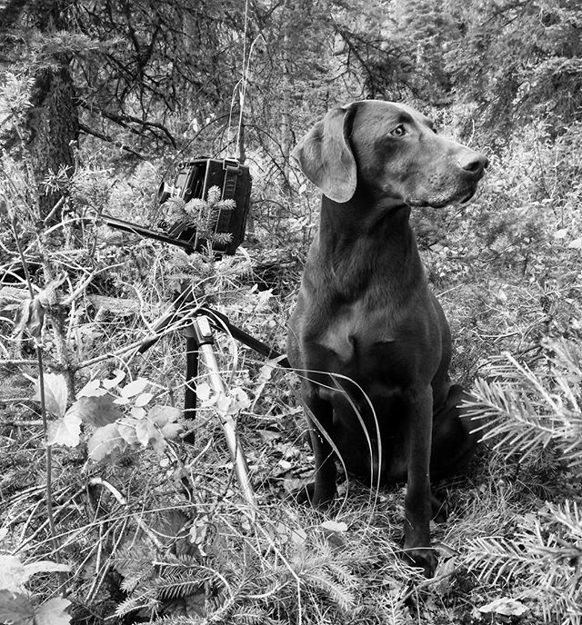 Brown dog and camera doing their things.