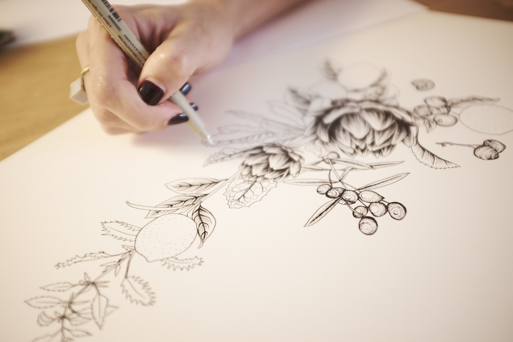 Adriana Picker Sydney Illustrator Botanical Illustration