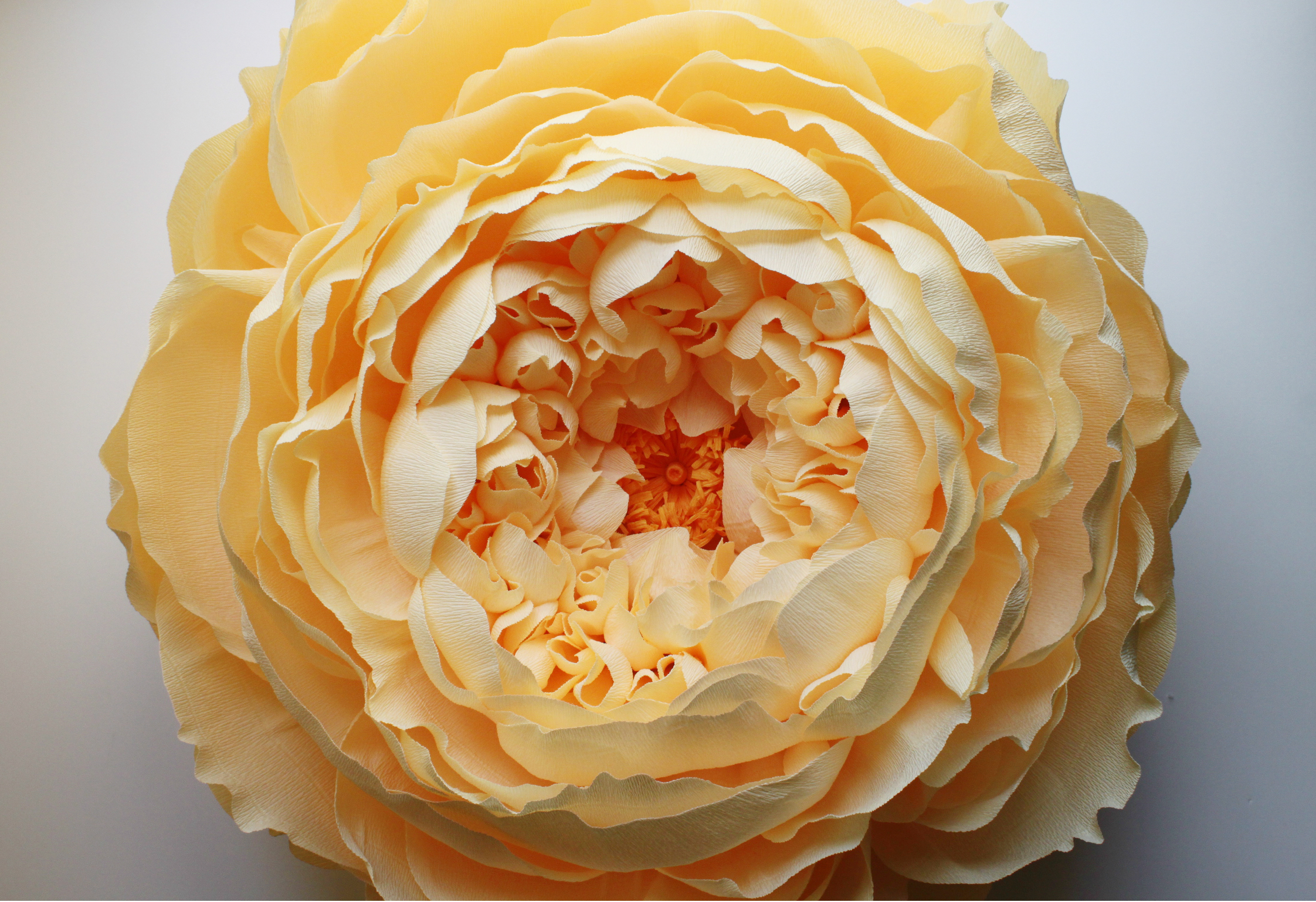 Portfolio tiffanie turner papel sf peony with stamen i mightylinksfo