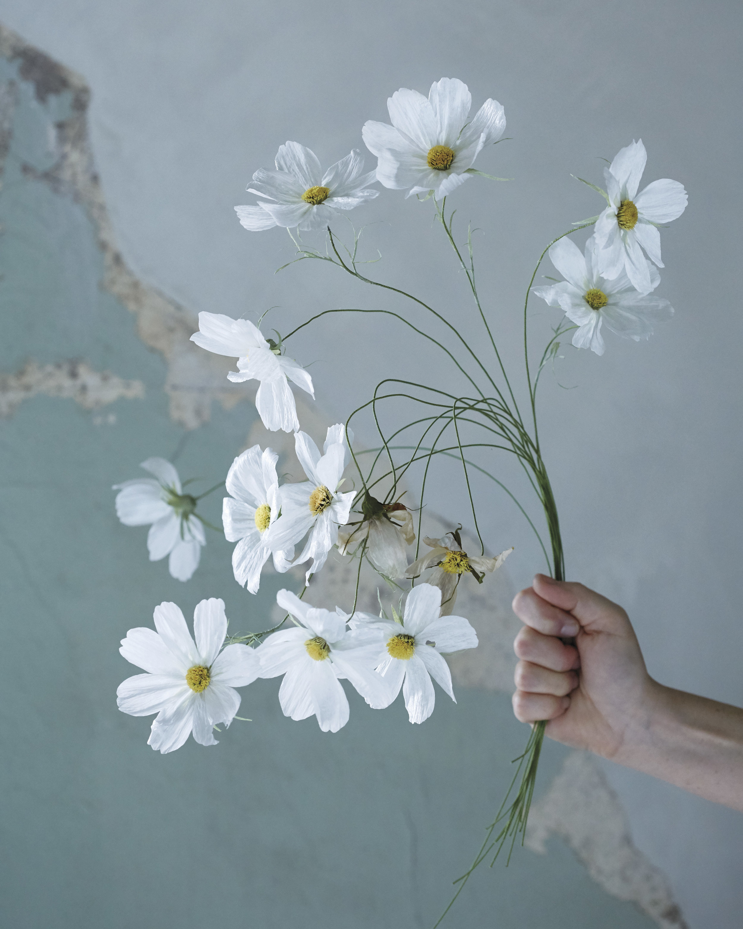 Tiffanie turner papel sf images from the fine art of paper flowers mightylinksfo