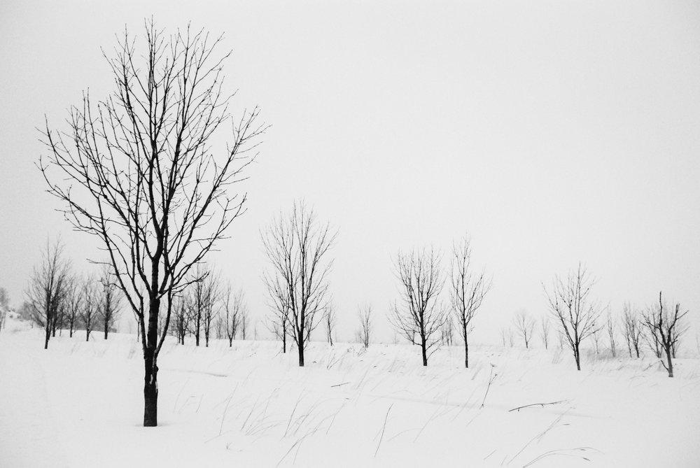 xuexiang-trees-1.jpg