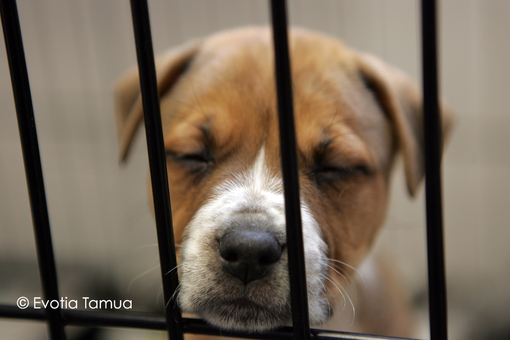 dog shelter.jpg