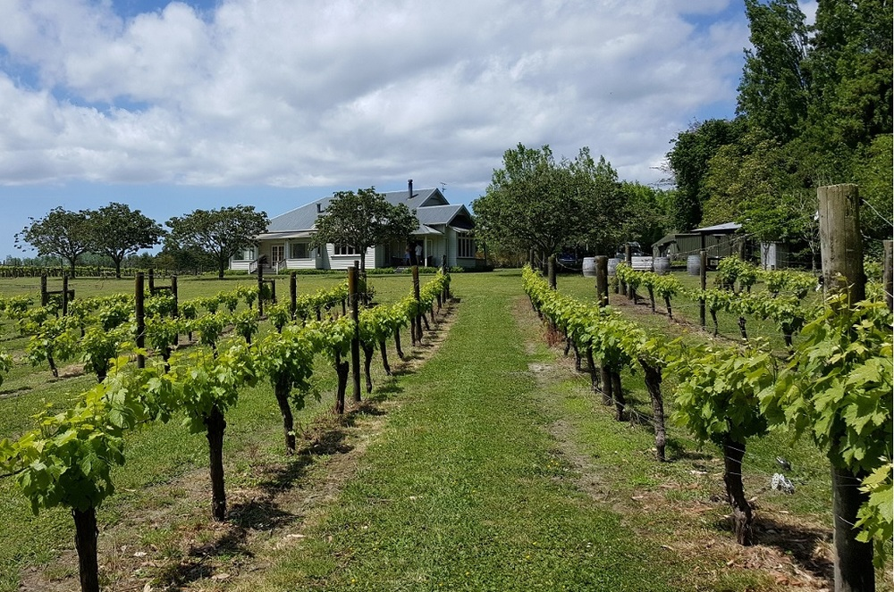 Auckland and Vineyard Tours -