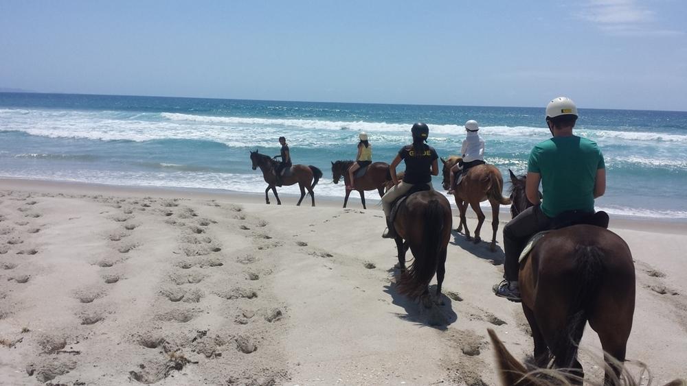 Pakiri Beach Horse Rides