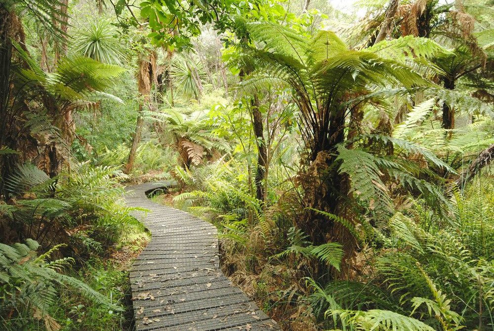 Kauaeranga Valley board walk.jpg