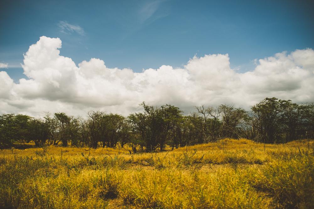 Road side fields