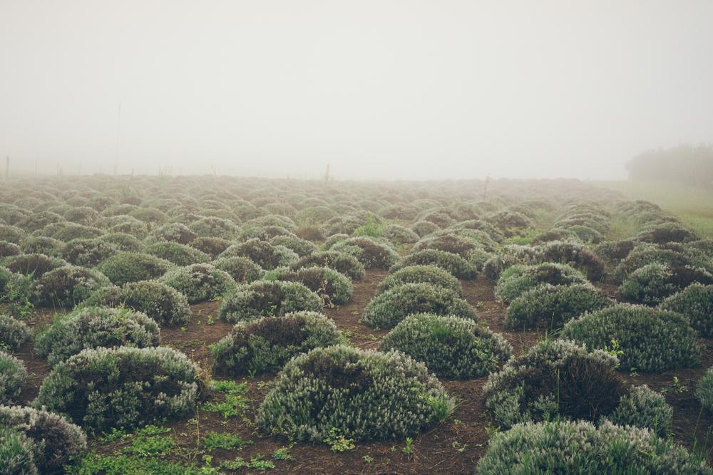 Endless mounds.