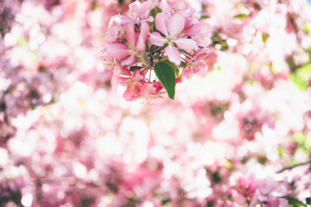 Flowering trees-02505.jpg