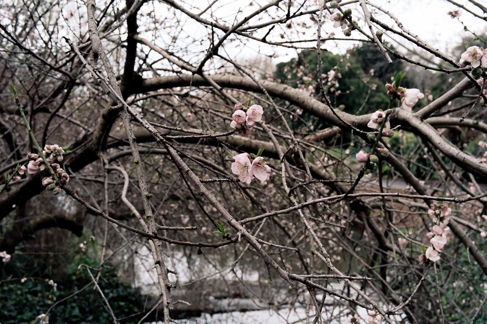 gardensAA022.jpg