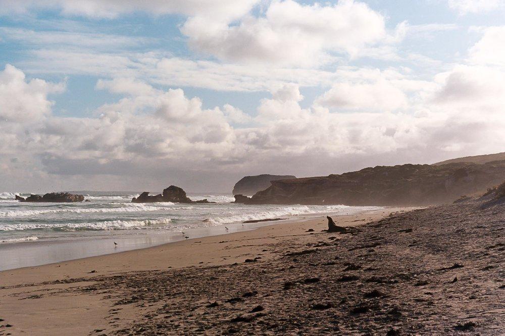 Kangaroo island sealsAA000A.jpg