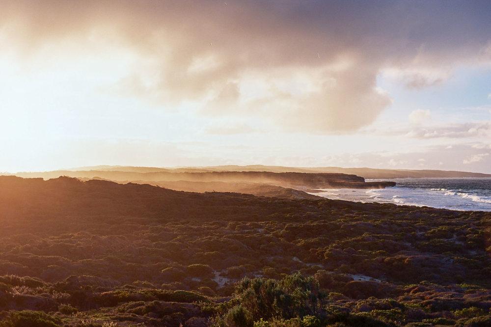 Kangaroo island sealsAA022A.jpg