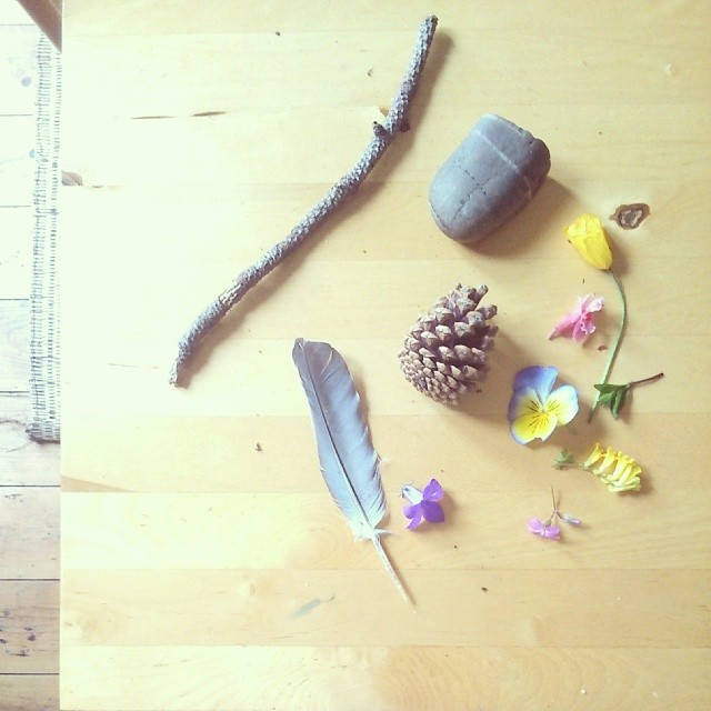 Photo by @peggypeg__ for the Nature in the Home Series on Little Green Shed