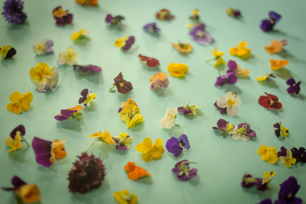 Edible Flowers From Cherry Tree Farm