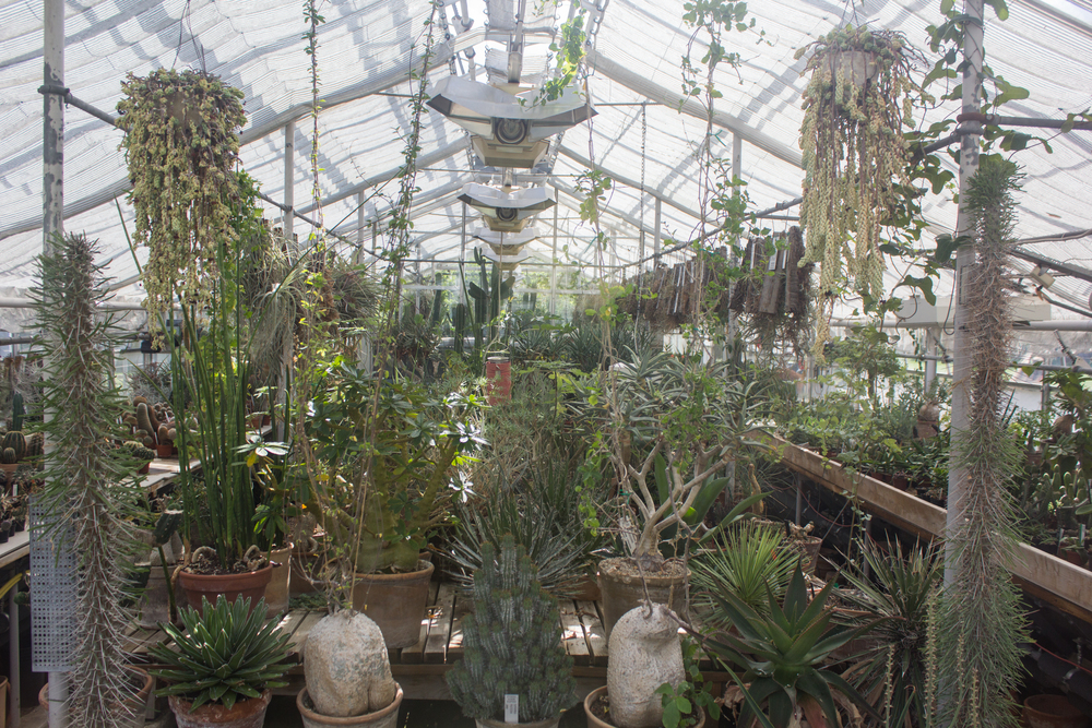 Botanical gardens Copenhagen | Seeds and Stitches blog