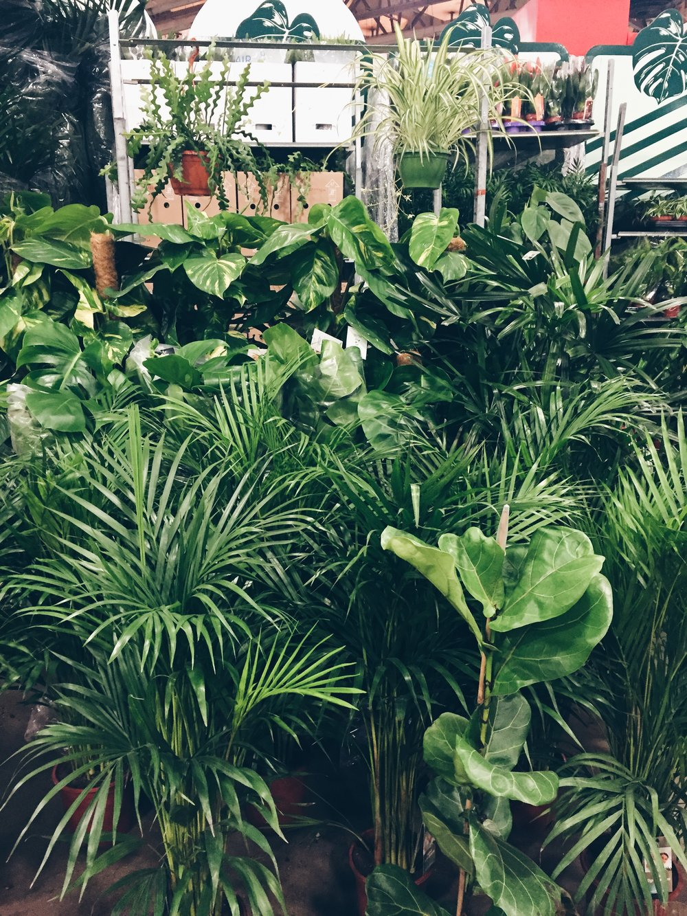 Outdoor Plants Nursery Located Between Santa Monica And: My Tips On Buying Bargain Plants And Flowers From New