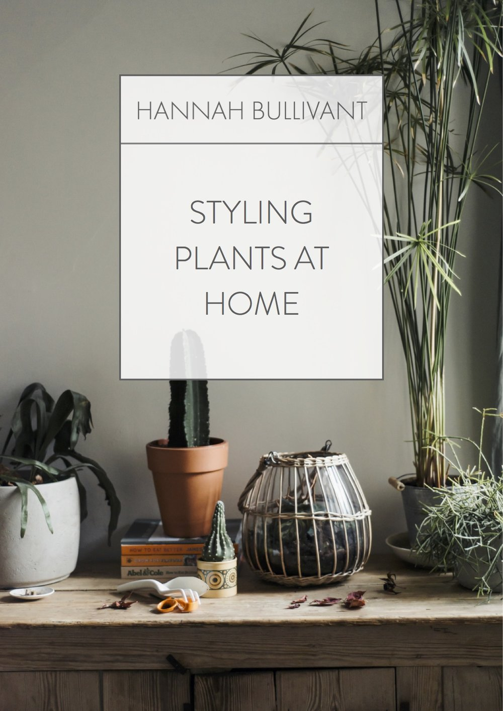 Styling plants at home | Hannah Bullivant
