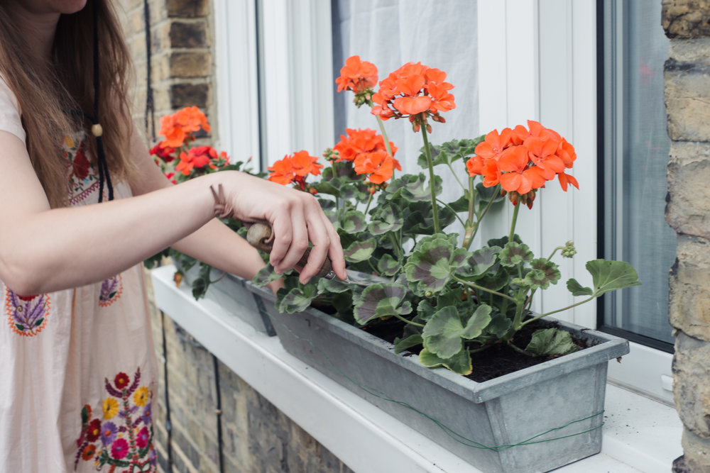 Red Gernium Window Boxes of Dreams | Hannah Bullivant