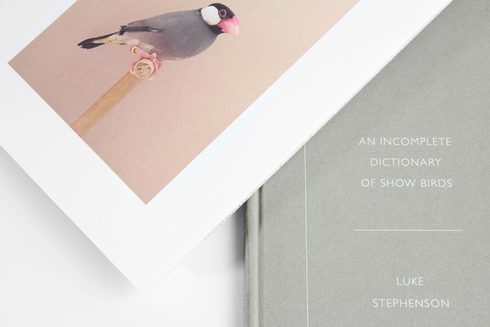 Show Birds Luke Stephenson