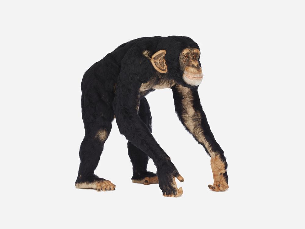 "Kiyoshi Mino ""Common Chimpanzee"" (Pan Troglodytes) via Chamber NYC"