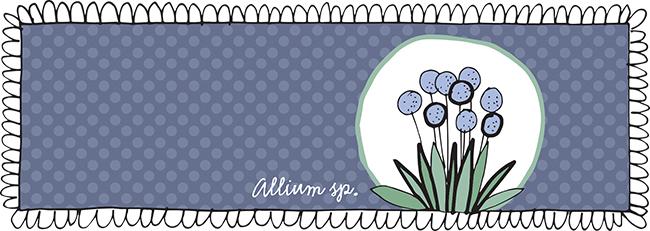 Allium+Circle.jpg