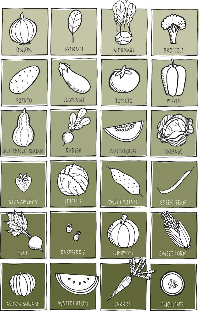 our+veggie+garden+2013.jpg