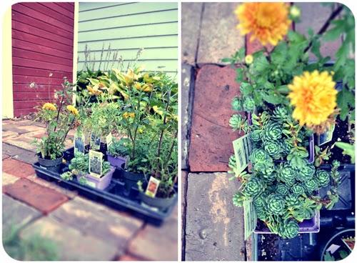 plant+binge.jpg