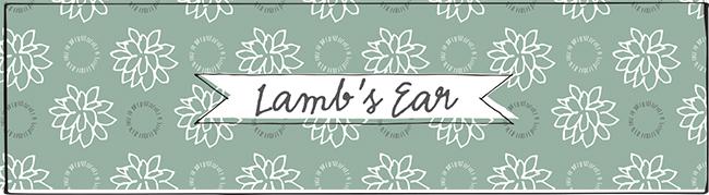 Lamb's+Ears-3.jpg