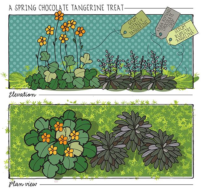 Chocolate+Tangerine+Spring+Planting.jpg