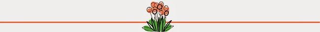 Allium+Divider.jpg