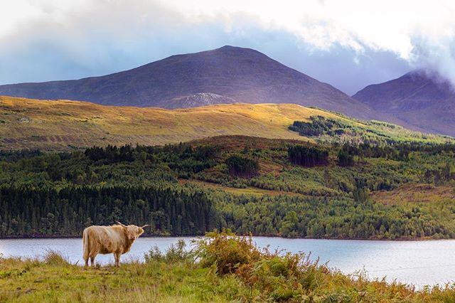 Ma new pal . . . #scotland #cow #highland #glencoe #landscape #mountains