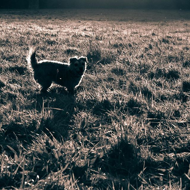 #autumn #dog