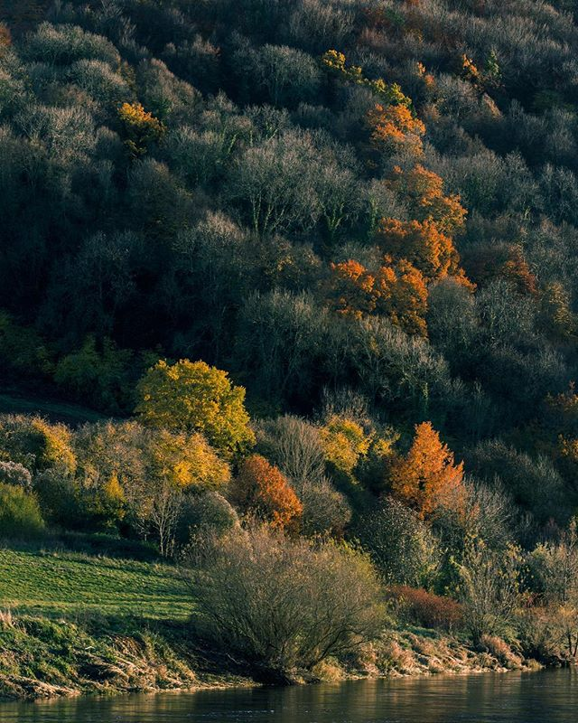 #autumn #trees