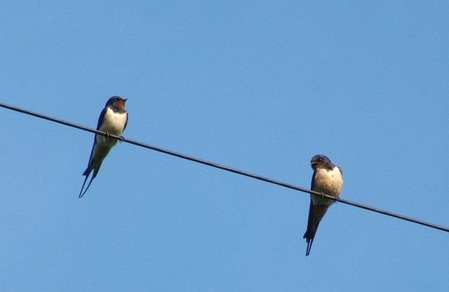 birds on a wire.jpg