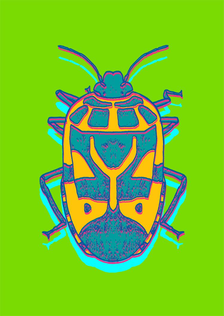 abistevensshieldbug