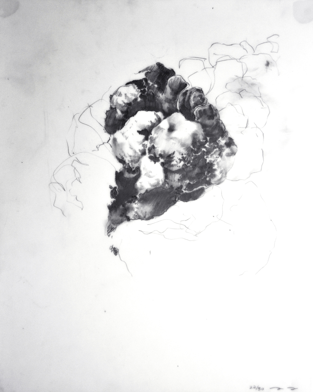 Graphite drawing by Ming Ying Hong (1 of 50), 2015