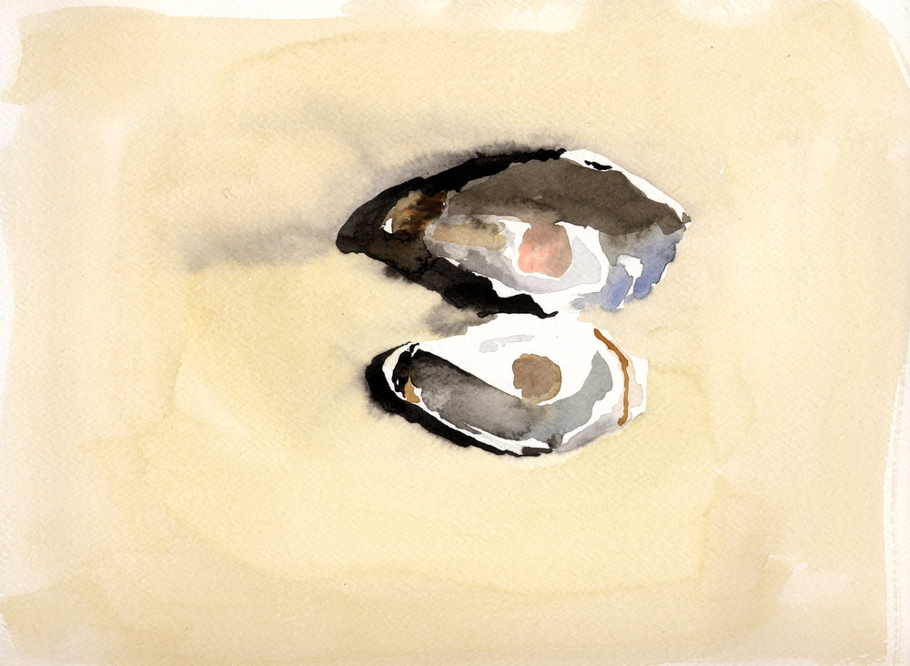 Watercolor Oyster Shells 2.jpg
