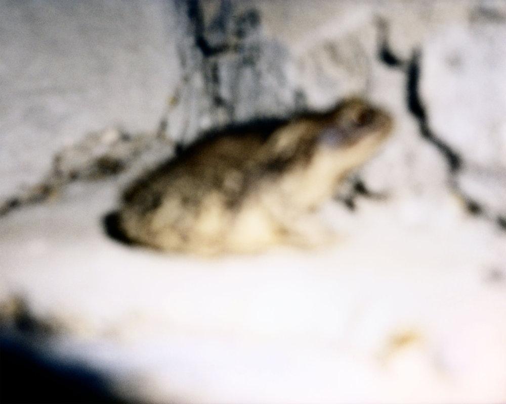 Bucky Miller Toad.jpg