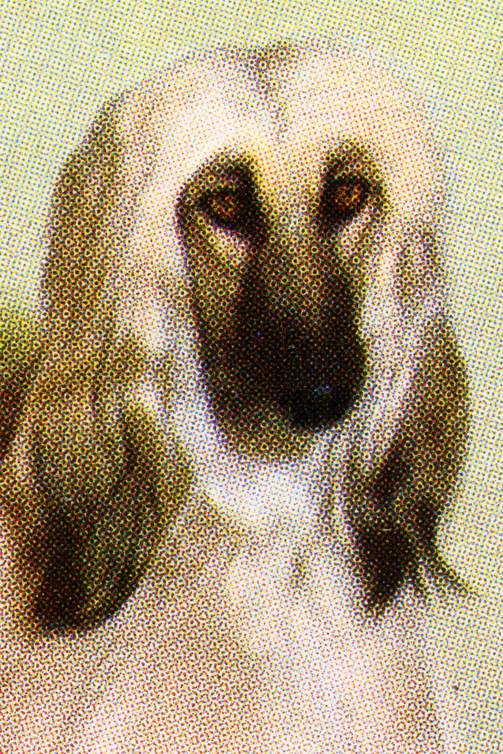 Bucky Miller The Picture of the Afghan Hound.jpg