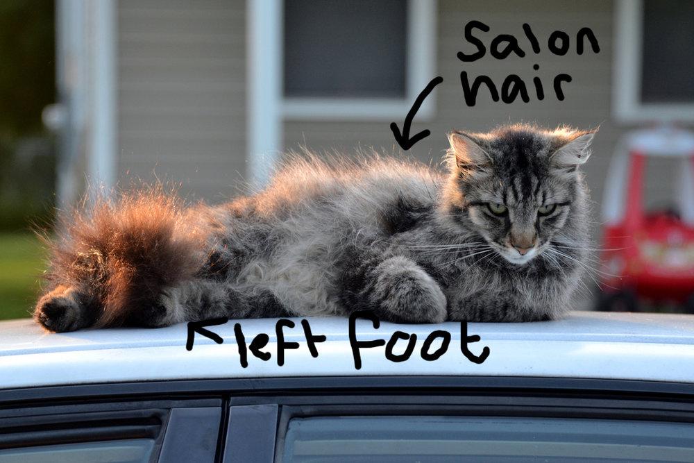 Left foot Kelvin Cat