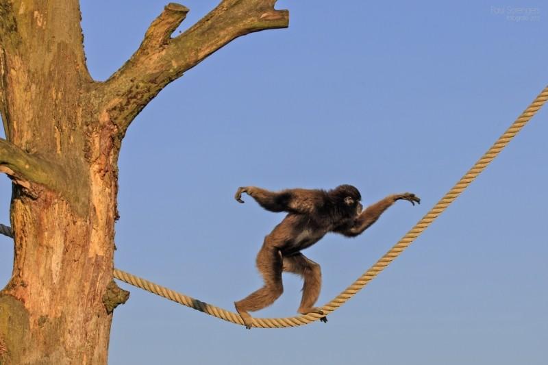 berber-monkey-monkey-monkeys-zoo.jpg