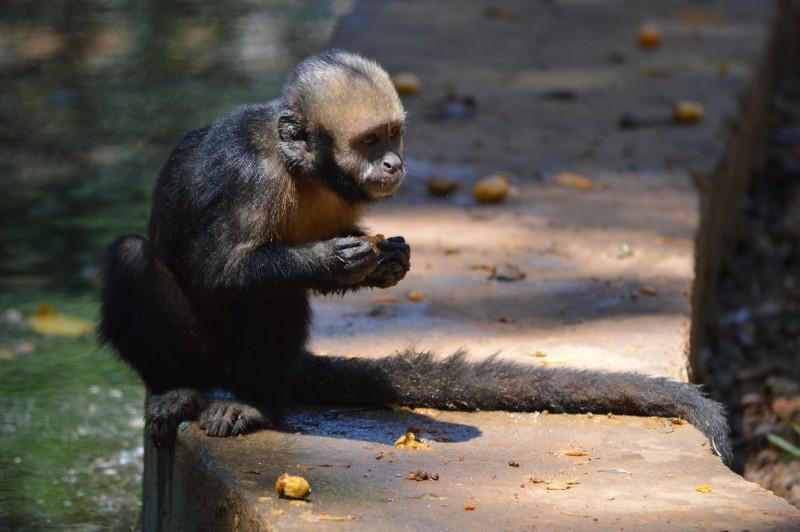 monkey-animals-salvador-bahia.jpg
