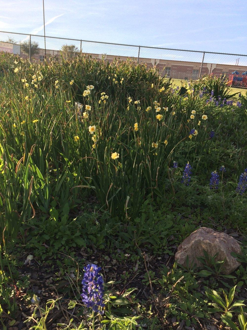 March Butterfly Garden I.jpg