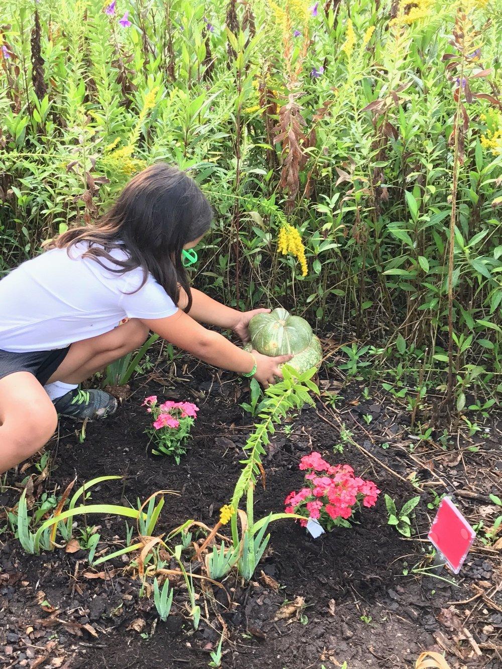 Placing the Pumpkins
