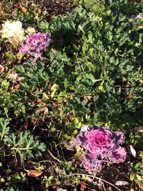 Butterfly Garden Febuary .jpeg