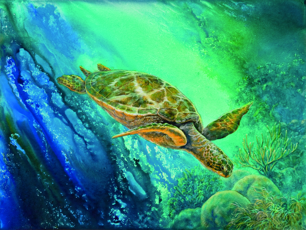 """Honu Diver"" watercolor"
