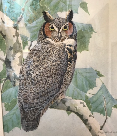"""Great Horned Owl""  Watercolor by David Plank SOLD"