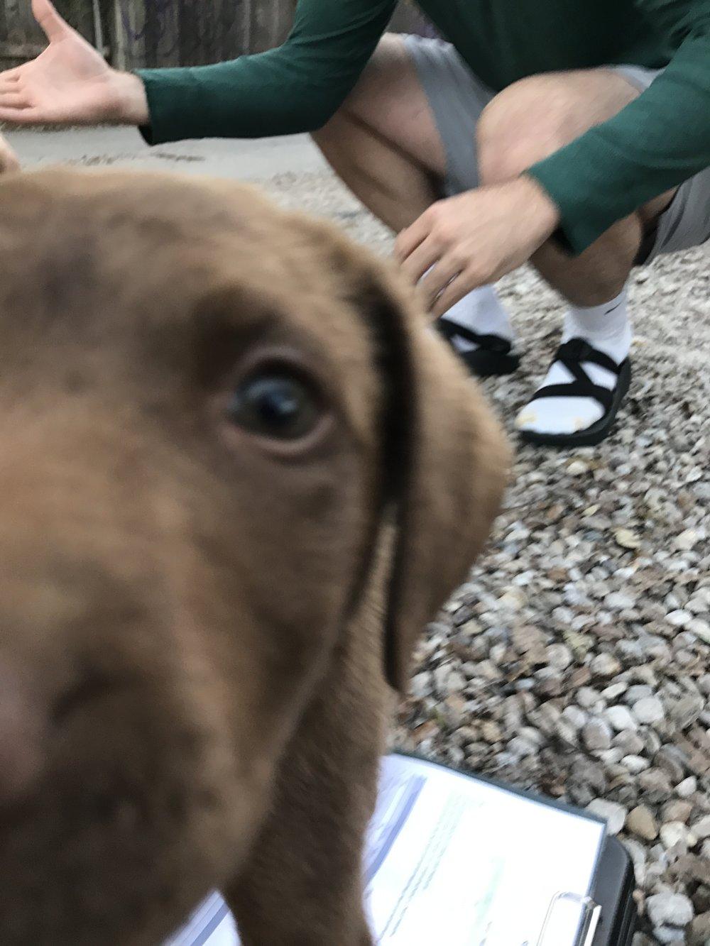 Aussie puppy!